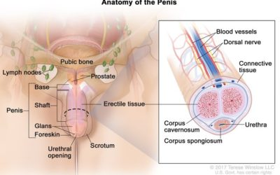 Penile needle play